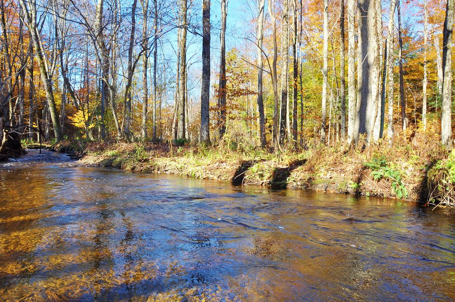 Pekin Brook Hard Wood Forest Wide