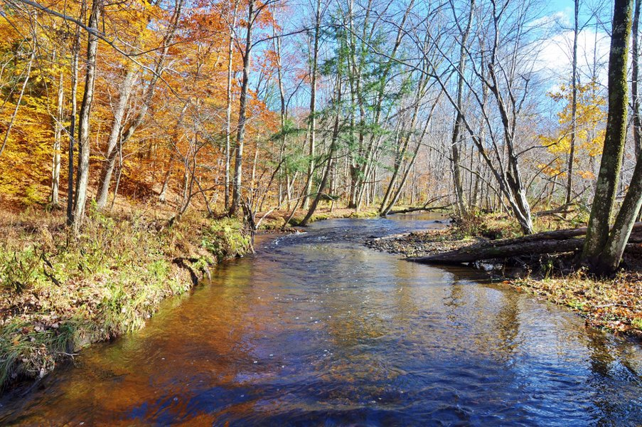pekin brook upstream